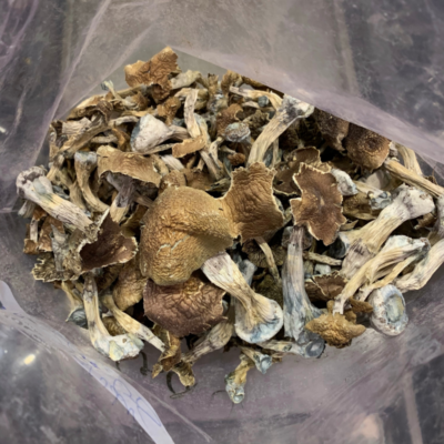 mushroom drug, shrooms online, psychedelic shrooms effects